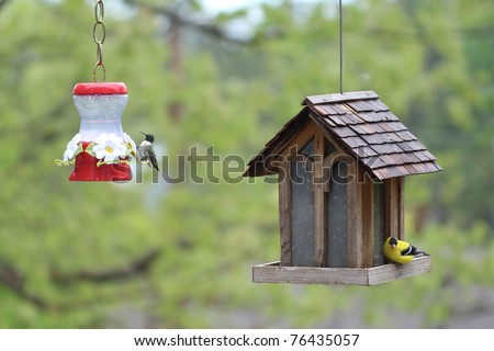 A hummingbird and a goldfinch visit the bird feeders on a lovely sunny spring day. - stock photo