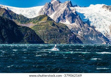 A humpback breaches beneath the glaciers of Northwestern Fjord in Prince William Sound, Alaska - stock photo