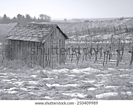 A hut in a vineyard in the winter time. - stock photo