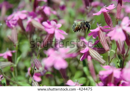 A insect - stock photo