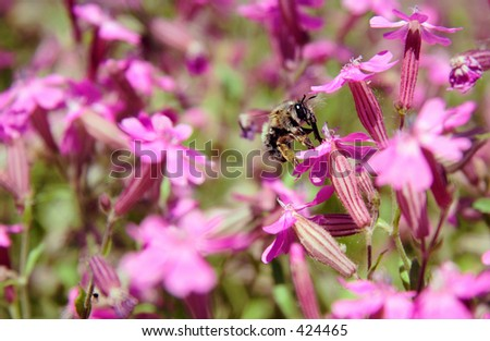 A insect in a field - stock photo