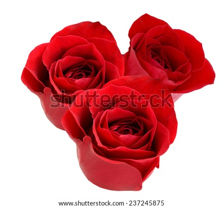 A isolated lovely red roses - stock photo