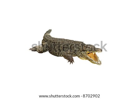 A isolated picture of a crocodile taken at a Miami zoo - stock photo