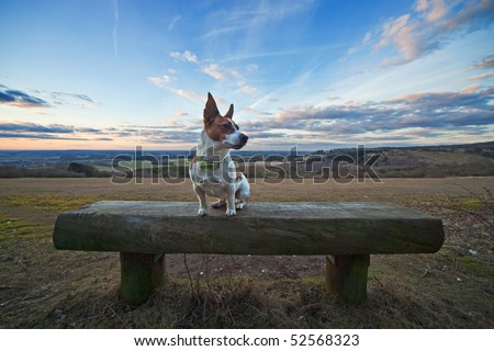 A Jack Russell terrier sitting on a wooden bench in an English landscape, with dramatic sunset sky in the background. Photo taken in Oxfordshire.