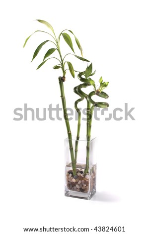 A jar with bamboo plants. - stock photo