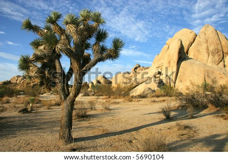 A Joshua Tree and rock formation typical of Joshua Tree National Park