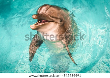 A joyful dolphin twisting and jumping out of the pool with sea water and smiling - stock photo