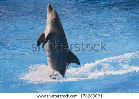 A jumping dolphin - stock photo