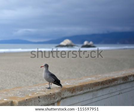 A juvenile western gull (shore bird), Larus occidentalis, sits on a concrete wall at Ocean Beach in San Francisco, California. Seal Rocks are seen in the background. - stock photo