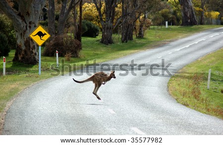 A kangaroo crossing in front of a warning sign in country Victoria, Australia - stock photo