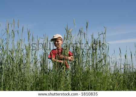 A kid in a field of rye - stock photo