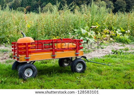 A kid sized pull wagon carrying pumpkins in a pumpkin patch