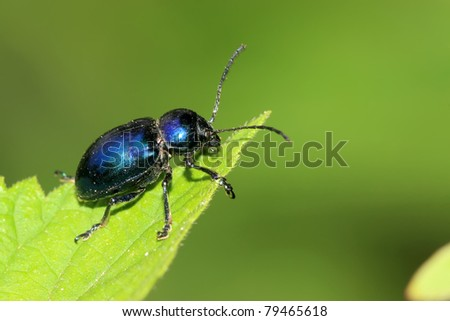 a kind of insects named beetle - stock photo