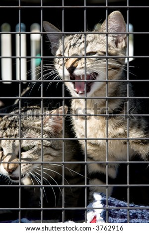 A kitten and a cat in a cage - stock photo