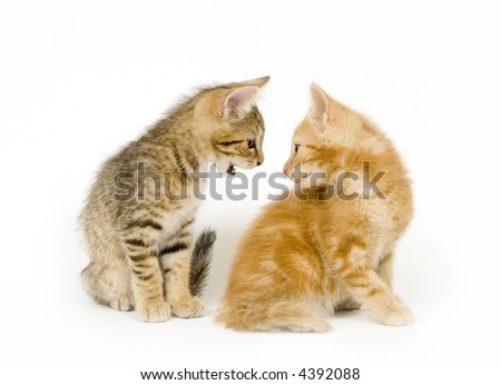 A kitten appears to be arguing with another kitten on a white background