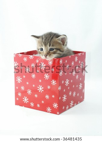 A kitten in a Christmas gift box