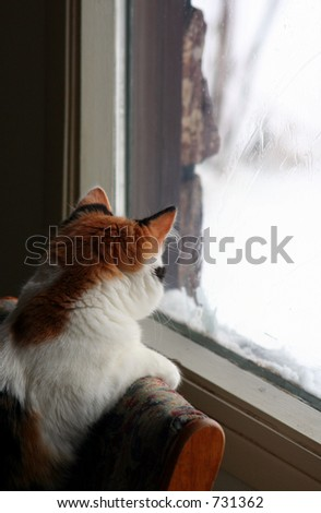 a kitten looking at snow - stock photo