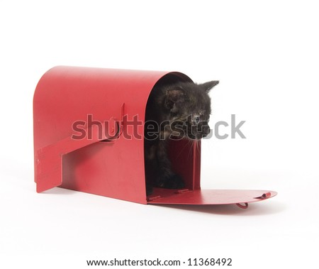 A kitten peeks out of a red mailbox on a white background. Similar photos with other kittens in gallery.
