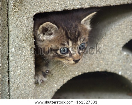 A kitten peering from within a stone encasing. - stock photo