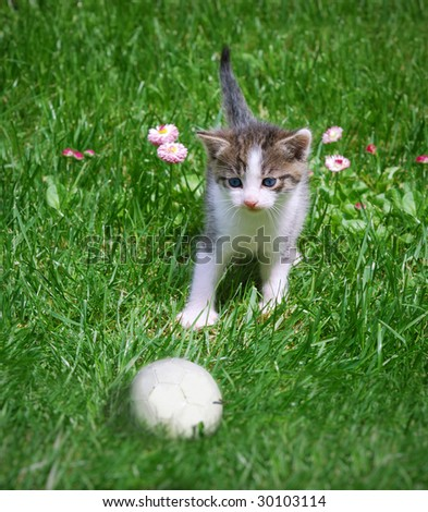 A kitten playing with a ball in the grass. - stock photo