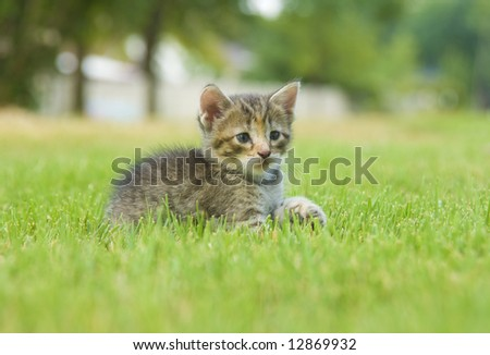 A kitten plays in the backyard of a home.
