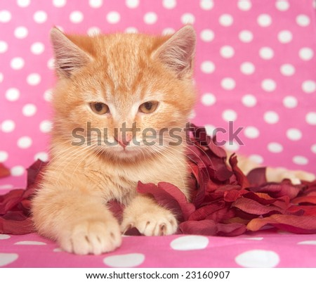 A kitten plays with red rose petals on a spotted background.