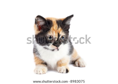 A kitten sits on a white background. Shallow DOF - stock photo