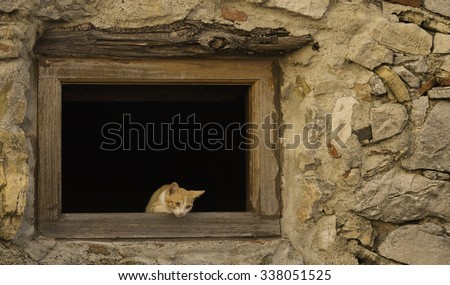 A kitten sitting in an open window in an old stone house in Tuscany, Italy. - stock photo