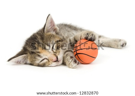 A kitten takes a nap on a white background. One in a series - stock photo