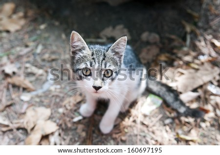 A kitty sitting on the ground in a park - stock photo
