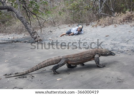 A Komodo dragon (Varanus komodoensis) stalks along a beach on the southern coast of Rinca Island in Komodo National Park, Indonesia.  - stock photo