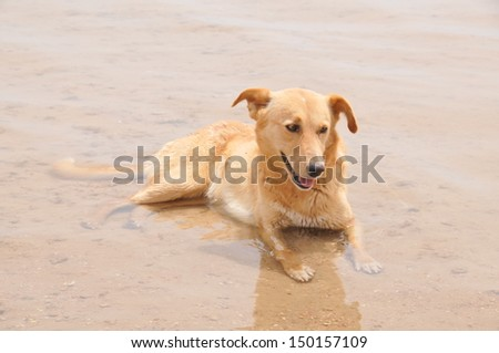 A Labrador cooling off in the Red Sea at Sharm El Sheikh in Egypt. It was around 40 degree's centigrade.