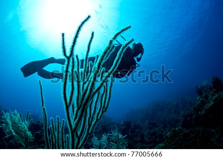 A lady scuba dives on a tropical reef on Roatan island