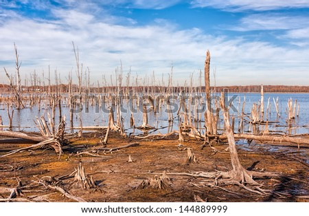 A lake and dead, fallen trees. Land that was once covered by water from the lake is now exposed. - stock photo