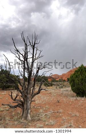 A landscape from America's beautiful desert near Kodachrome State Park, Utah, USA - stock photo
