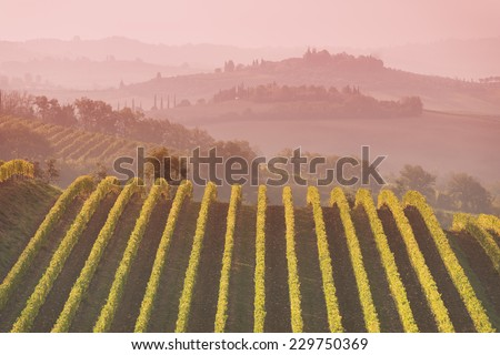 A landscape in Chianti during the autumn - stock photo