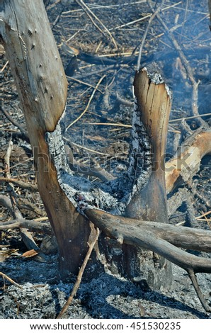 A landscape in leafy forest after fire. Spring. - stock photo