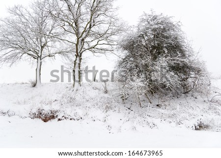 a landscape in winter with snow and trees - stock photo