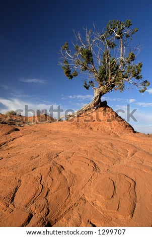 A landscape of tree and red sandstone from America's beautiful desert near Escalante, Utah. - stock photo