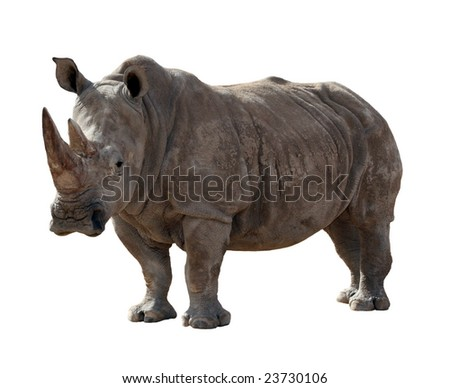 A large adult rhino isolated on a white background - stock photo