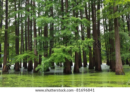 a large and beautiful flooded forest green