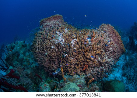A large barrel sponge grows on a diverse coral reef in the Caribbean Sea. Sponges are important filter-feeders found in all oceans. - stock photo