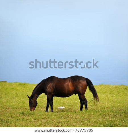 A large brown horse eats grass with a small white duck bird eating some too, directly underneath him. - stock photo