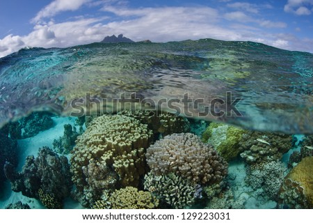 A large collection of colorful coral colonies grow on a sandy bottom near the islands of Raiatea and Tahaa in French Polynesia.  This region is the essence of tropical beauty. - stock photo
