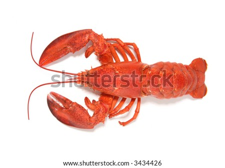 A large cooked red lobster over white - stock photo