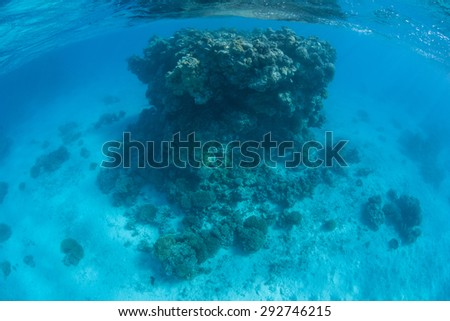 A large coral bommie rises from the sandy seafloor of a French Polynesian lagoon. Lots of sunlight and warm, clear waters allow corals to grow quickly here. - stock photo