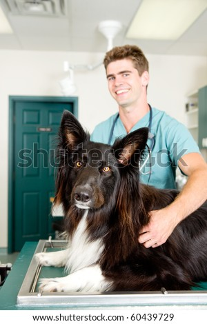 A large dog at a small animal clinic in the surgery prep. room.  Shallow depth of field, focus on dog - stock photo