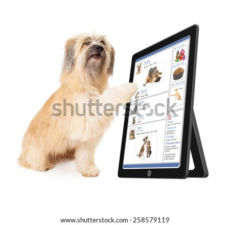 A large dog scrolling through a social media website on a tablet device