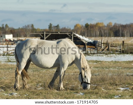 A large draft horse in a pasture