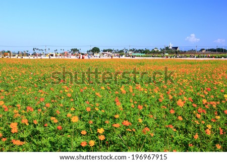A large field of tall orange flowers with green stems. - stock photo